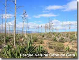 Agave plant landscape in the Cabo de Gata Natural Park