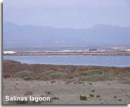 Flamingos on the coastal lagoon at Cabo de Gata