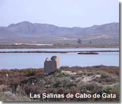 Bird watching at Las Salinas de Cabo de Gata in Almeria