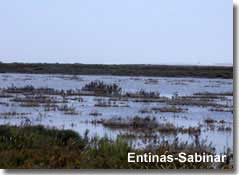 Birdwatching at Puntas Entinas-Sabinar in Almeria