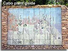 Plant guide at the start of the Amoladeras nature walk in the Cabo de Gata