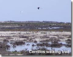 Bird watching along the Cerrillos walking trail