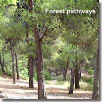 Forest pathways of Sierra Gador