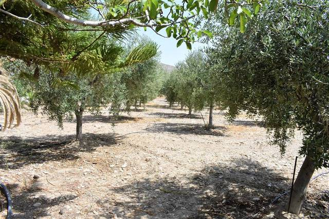 OLV1435: Cortijo for Sale in Uleila del Campo, Almería