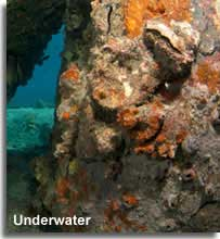 Colourful underwater diving landscape