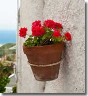 Flower pot on a white washed Andalucian village house