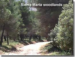 Walking trail through the woodlands of Sierra Maria in Almeria